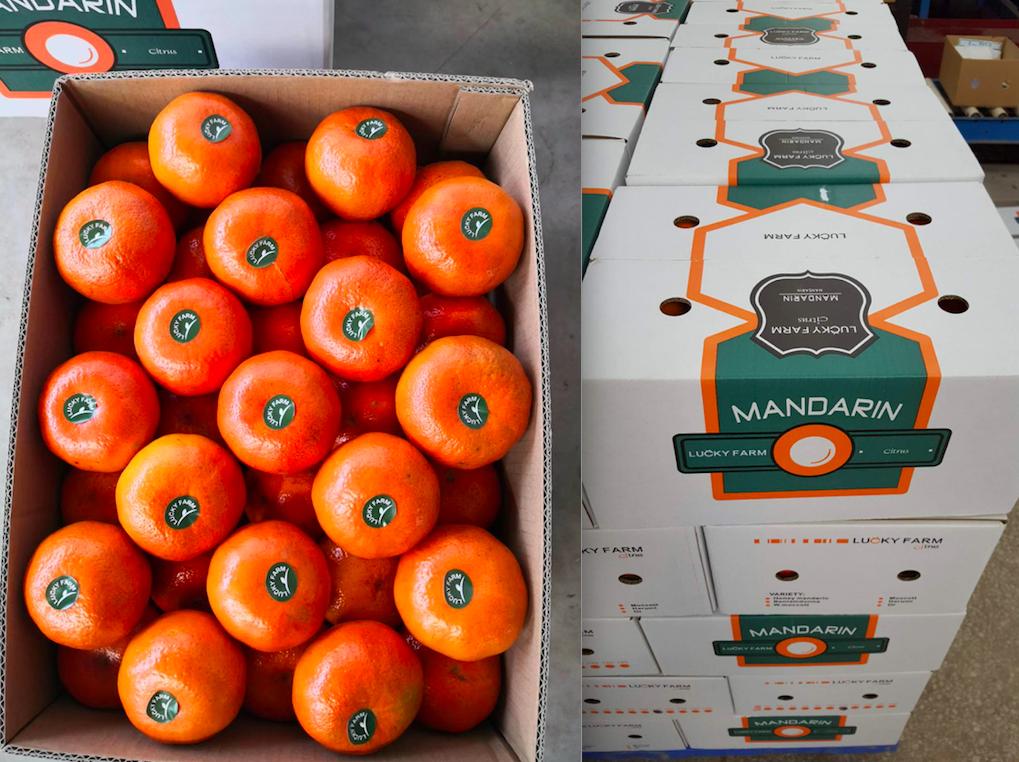 Exportation En Vrac Naturel Fruits Frais Pommes