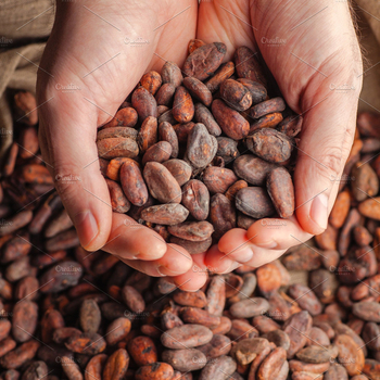 Cacao Bean Cocoa Organic Certified From South Africa Buy