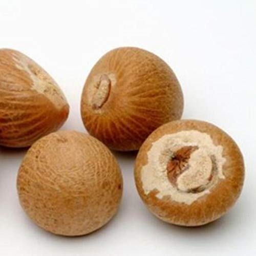 Dried Raw Best Quality Whole Betel Nuts