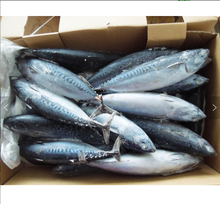 Seafoods और <span class=keywords><strong>जमे</strong></span> <span class=keywords><strong>हुए</strong></span> खाद्य टूना SkipJack <span class=keywords><strong>मछली</strong></span>