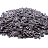 Confectionary Sunflower seeds Jaguar type
