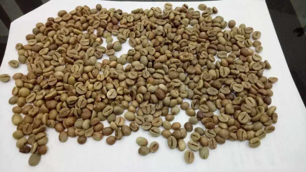 Indonesian Green Coffee Beans Pagaralam Buy Indonesian